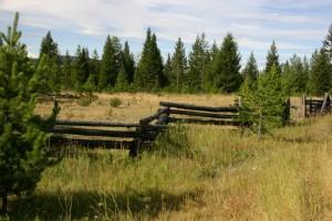 Rustic Log Snake Fences