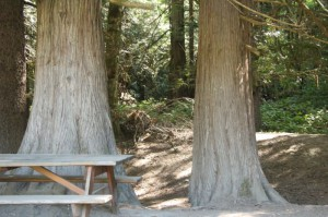 Big Trees in the Valley