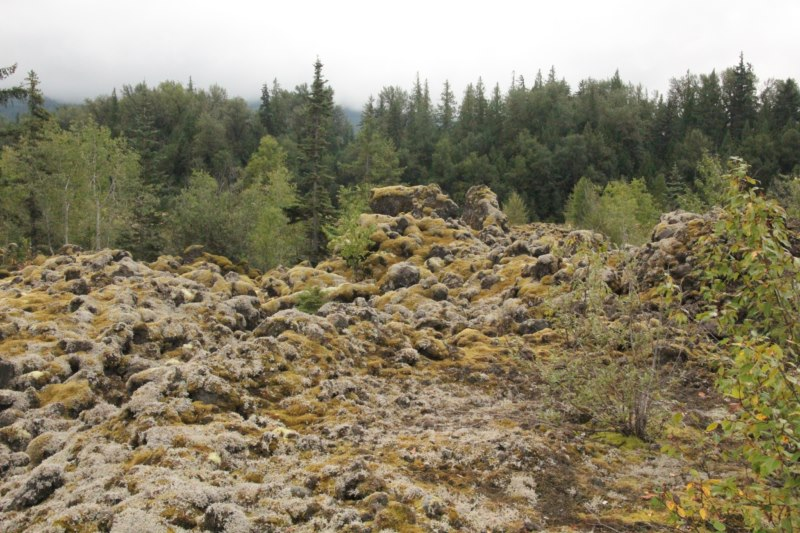 Basalt lava flow covered with mosses and lichens